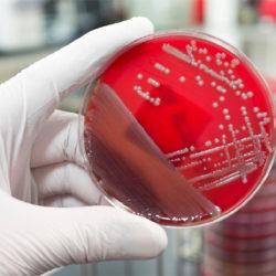 microbiology_2