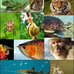 zoology_1